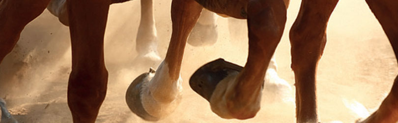 equestrian dust control solutions